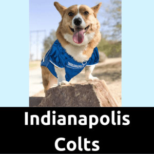 DogFootballJersey_IndianapolisColtsHome