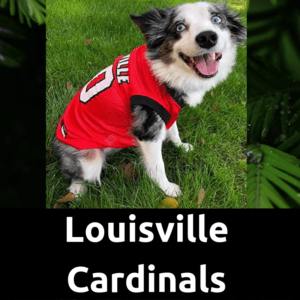 DogFootballJersey_LouisvilleCardinals