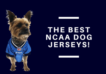NCAA Dog Football Jerseys